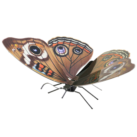 metal earthe  Butterflies - buckeye
