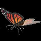 metal earth  Butterflies - monarch